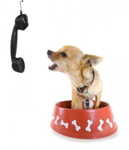 contact k-9 kuts today