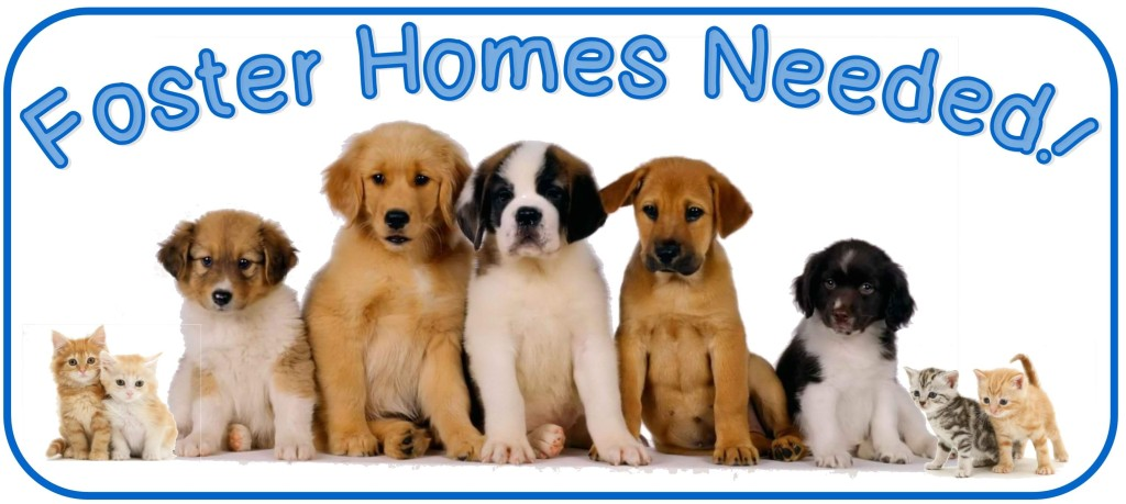 foster pets reduced
