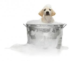 K-9 Kuts, a Weston, FL dog and pet groomer, dog in bath