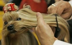 Dog Grooming at K-9 Kuts a Weston dog and pet groomer