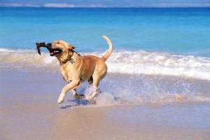 K-9 kuts dog groomer weston florida dog on the beach