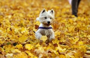 Weston dog groomer K-9 Kuts autumn dogs