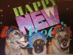 Dogs celebrating the new year