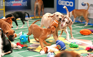 Puppy Bowl X shown by the affordable groomer in Weston, Photo courtesy of Animal Planet and Entertainment Weekly