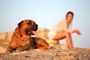 dog in hot august heat