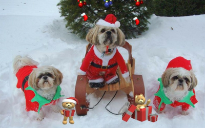 Gratitude and Good Holiday Wishes from Weston's Favorite Groomer