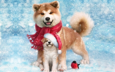 Holiday Discounts from Your Favorite Groomer